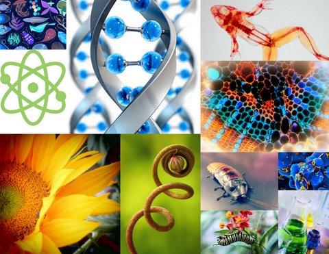 Cabang-cabang Ilmu Biologi Dan Pengertiannya