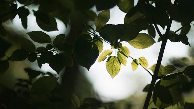 Árvore, Folhas, Galhos, Fotografia, Natureza