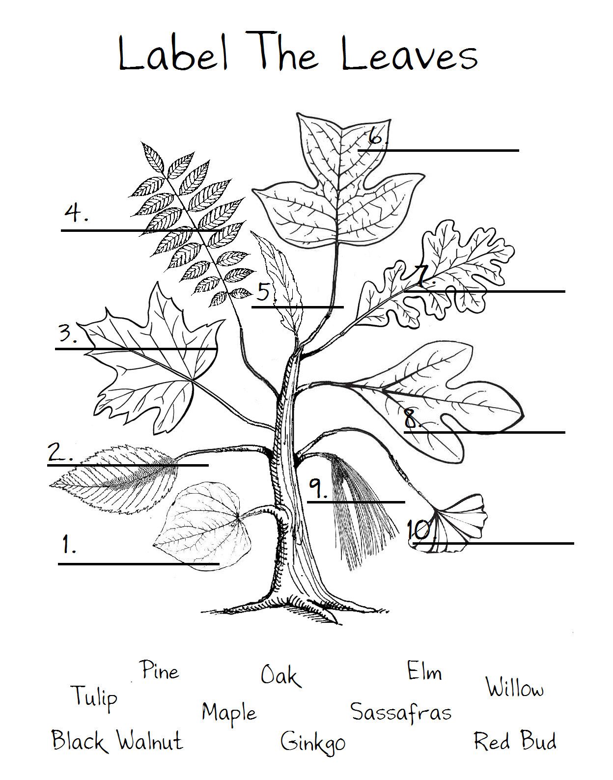 Worksheet For Kindergarten Parts Of Leaf