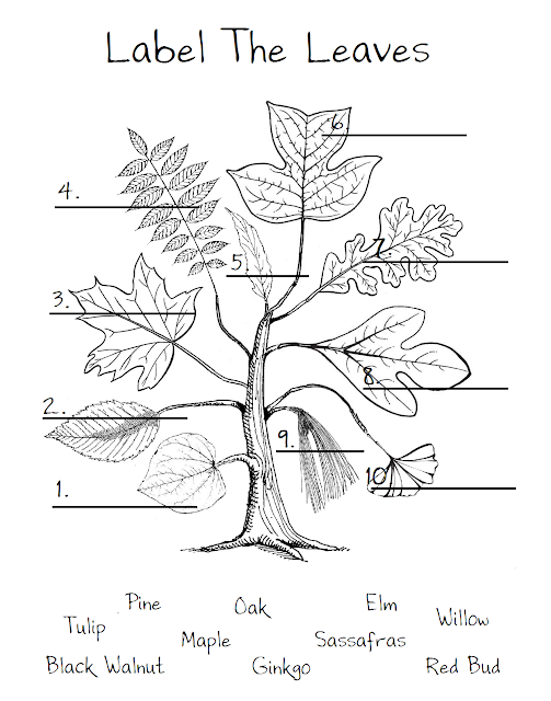ChickeeMaMa: Leaf Worksheet
