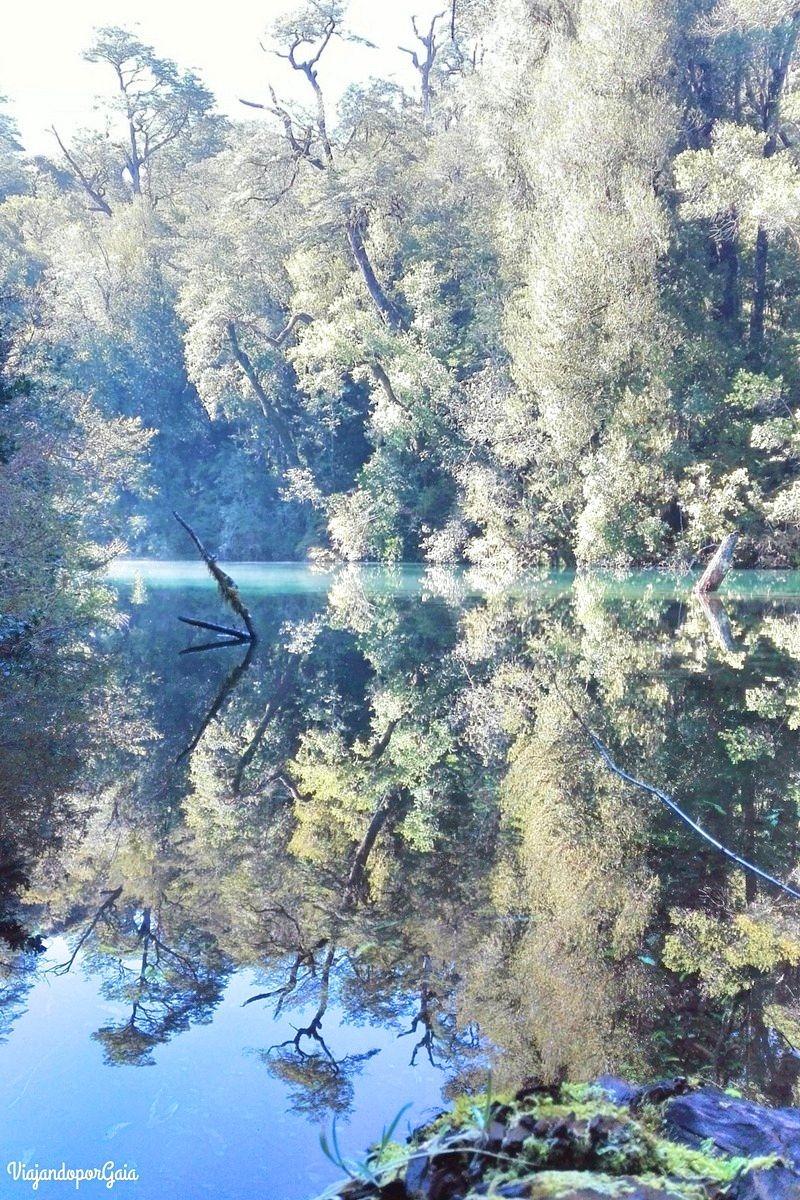 El bosque y el reflejo en el agua
