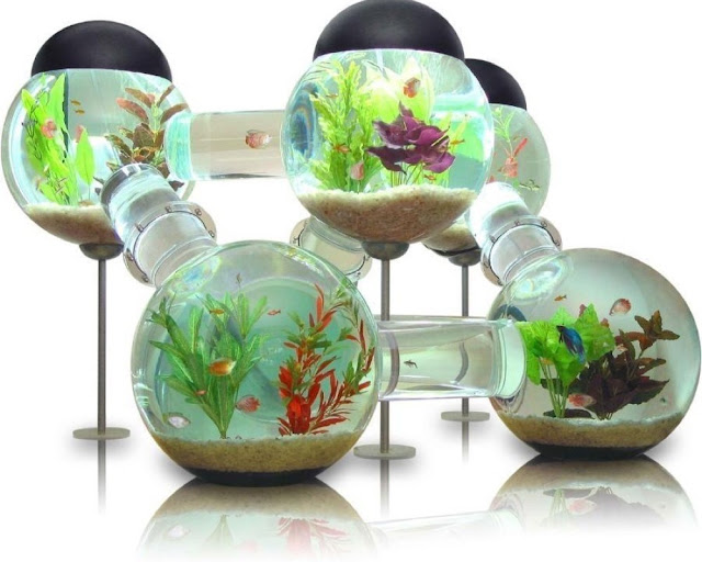 fish-labyrinth-aquarium