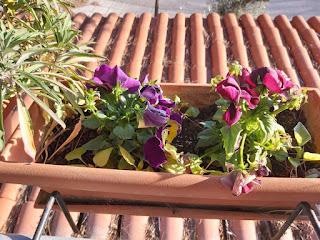 Λουλούδια για το Καλοκαίρι