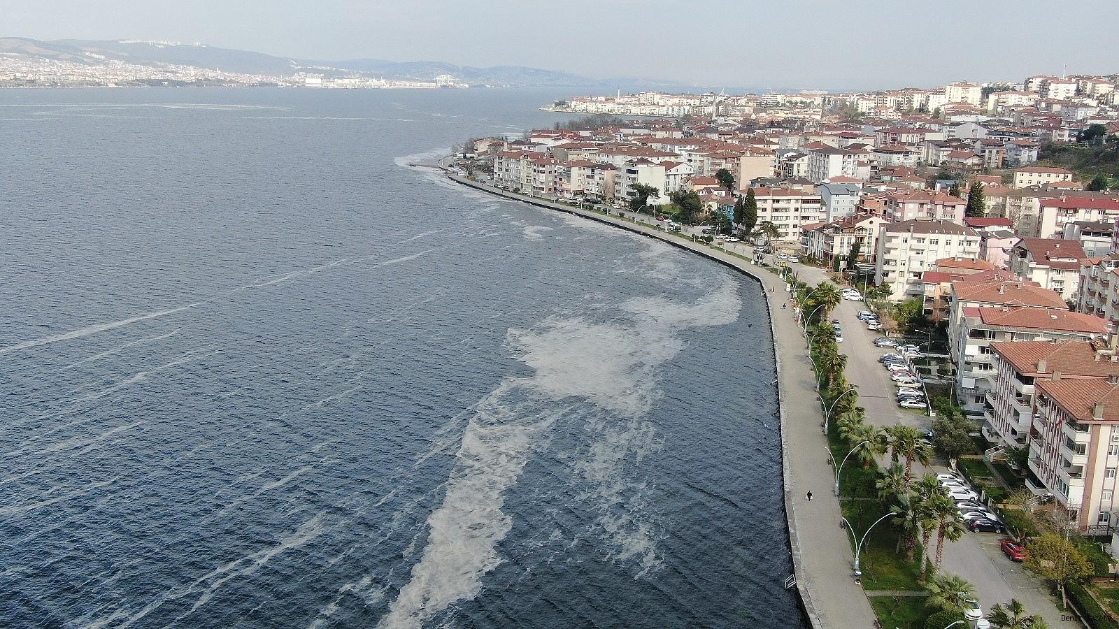 Deniz salyası nedir, deniz salyası nasıl oluşur, deniz salyası ne zaman oluşur.
