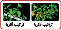 النباتات الوعائية البذرية