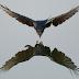Hiệu ứng chim mồi và loại bỏ chim mồi trong KD