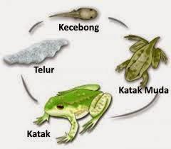 Metamorfosis pada Makhluk Hidup