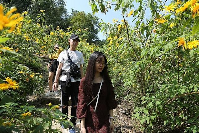 """Giới trẻ Hà Thành rủ nhau đi """"check-in"""" với hoa dã quỳ 7"""