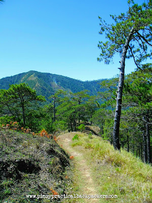 Mt. Ugo Traverse, Cordillera mountain range, Pine Trees