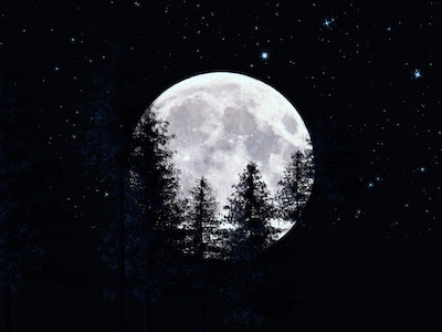 Moon and trees in a dark night background
