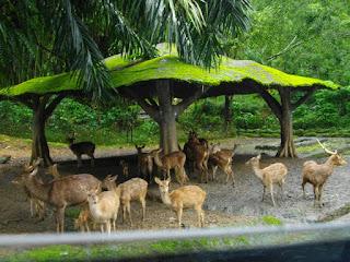 Foto Taman Safari Bogor