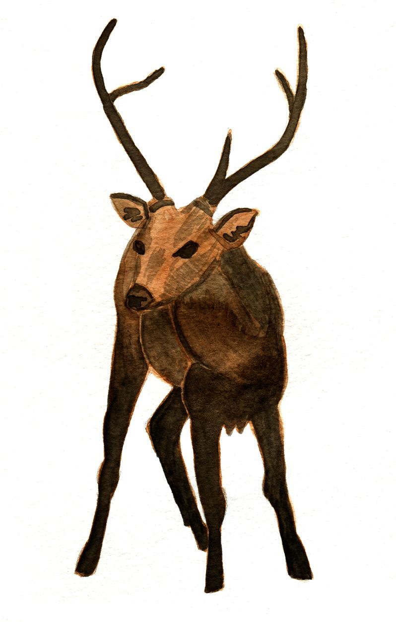 365 animals: January 2012