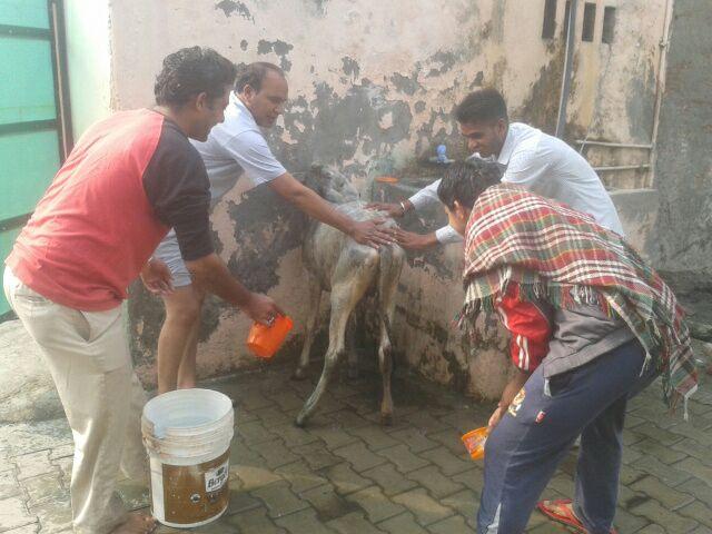 """Vaizdo rezultatas pagal užklausą """"कृष्ण और गाय"""""""