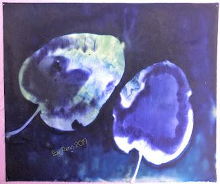 Wet cyanotype -Sue Reno_Image 659