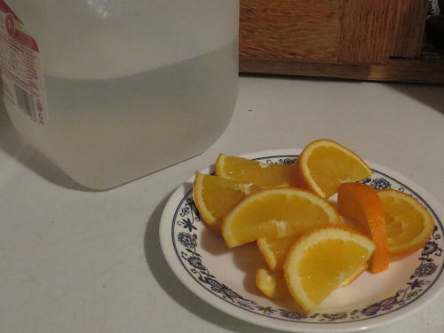 plate of orange slices