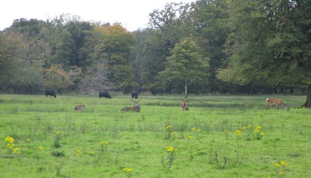 punapeura, Killarney luonnonpuisto