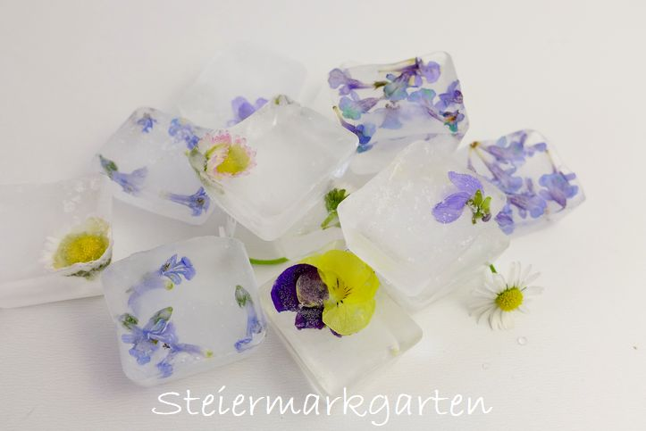 Sommerliche-Blüteneiswürfel-Steiermarkgarten