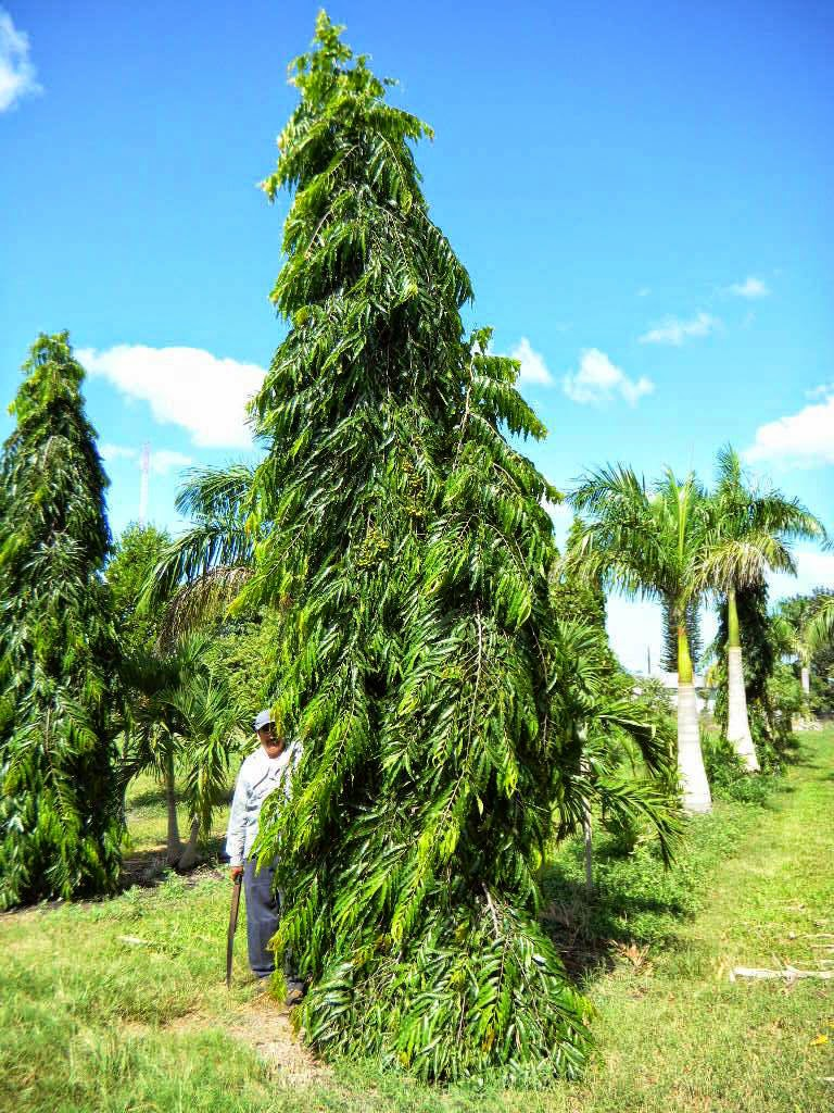 Liliana Usvat - Reforestation and Medicinal use of the ...