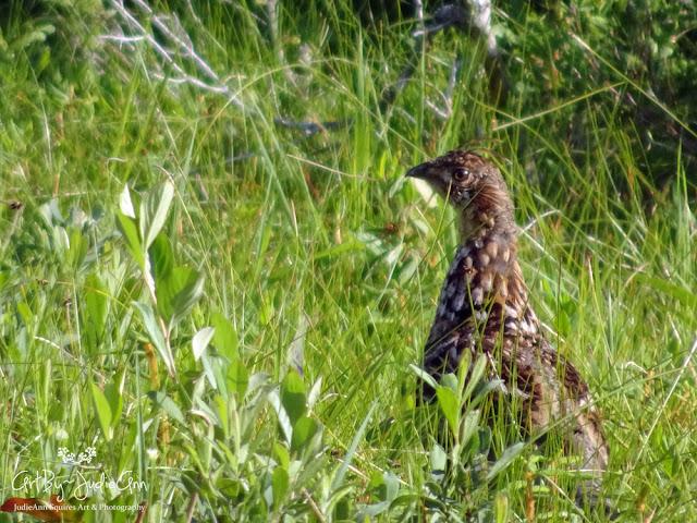Ruffed Grouse In Wetland