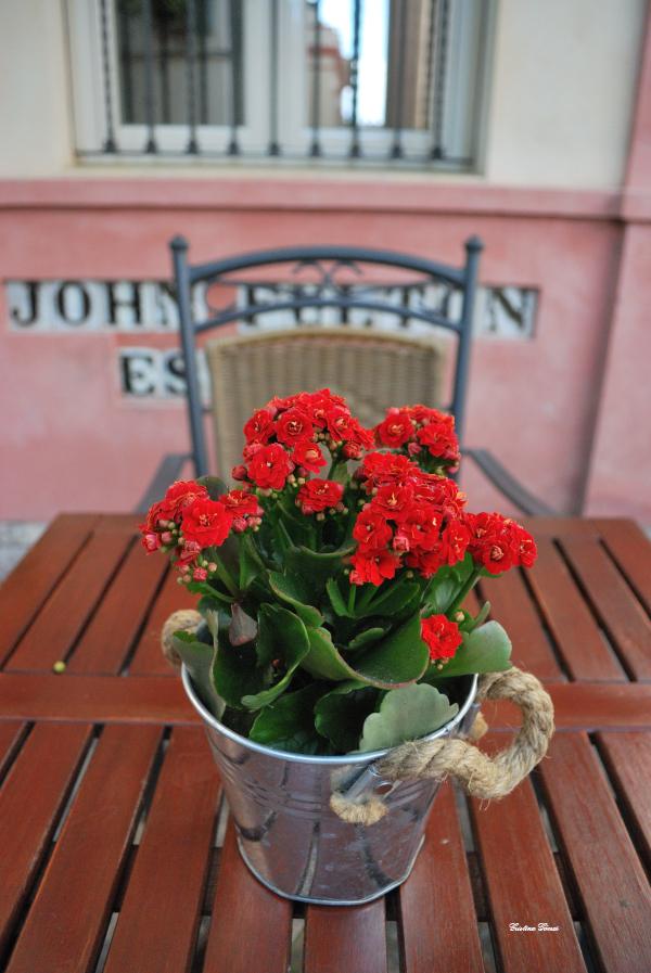 flowers barrio santa cruz seville spain