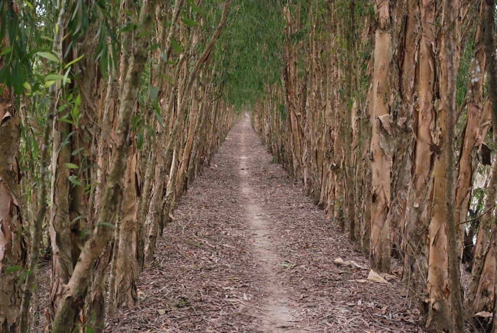 Mùa khô ở rừng Tràm Trà Sư