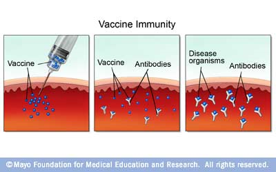 diagram of how vaccines work 2000 subaru outback exhaust system colgate immunology blog novel vaccination strategy immunization schematic a vaccine is injected and bound by antibodies so that when the pathogen invades host there are already
