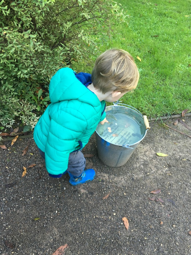 Birthday-boy-toddler-looking-into-bucket-full-of-water-and-coins
