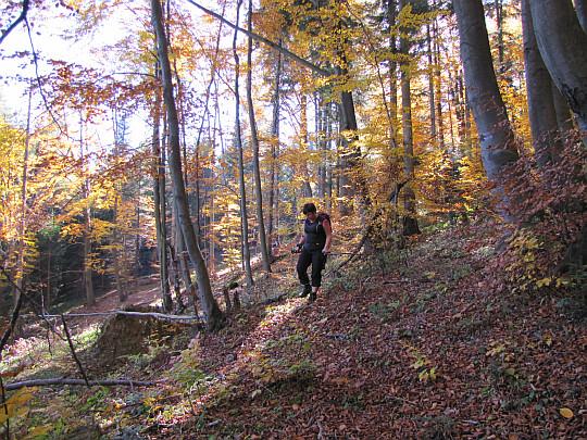 Zejście z Koziego Żebra w kierunku doliny potoku Regetówka.