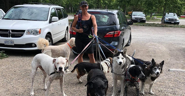 Professional dog walker shares joys, challenges, & true stories about the job