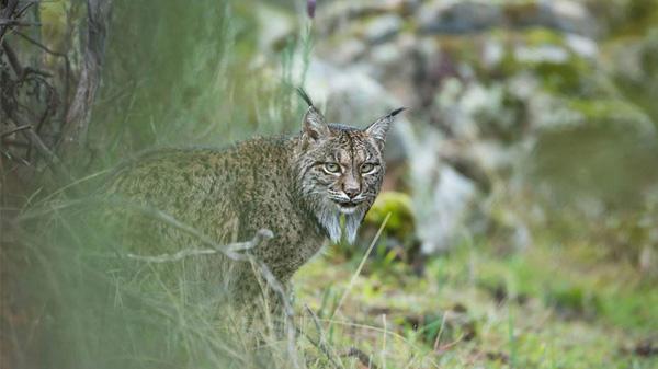 Vahşi Yaşam Fotoğrafları - 8