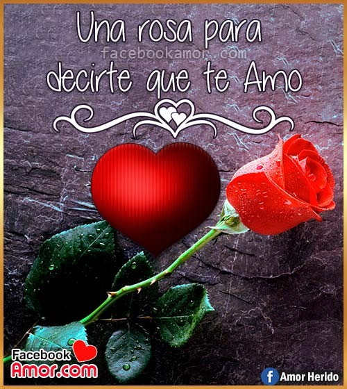 rosa para amor te amo