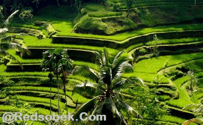 Tegalalang Tourism Site 2