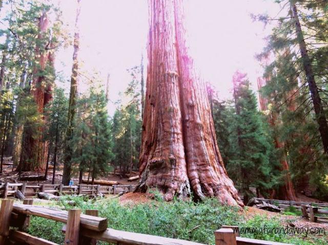 Sequoia General Sherman