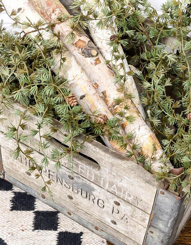 birch logs and winter greenery