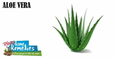 Home Remedies To Get Rid Of Chest Acne: Aloe Vera