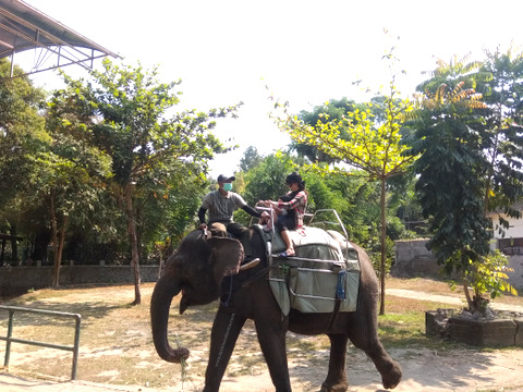 tunggang gajah di gembira loka Yogya
