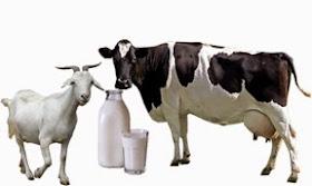 manfaat-susu-kambing%2B%25281%2529.jpg