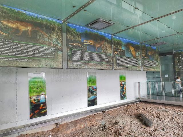 jak wygląda stanowisko paleontologiczne? Krasiejów i szczątki metopozaura