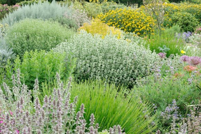 Plantas r sticas y resistentes a la sequ a ii guia de for Arbustos de jardin
