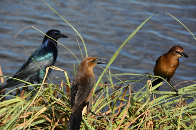 Everglades Rivers birds