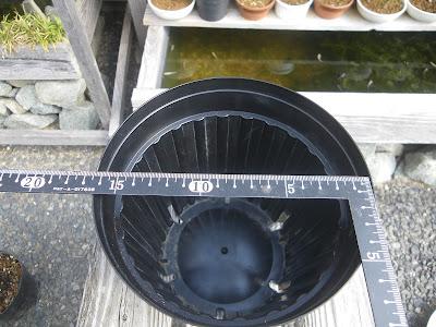 鉢 5号(直径15センチ)