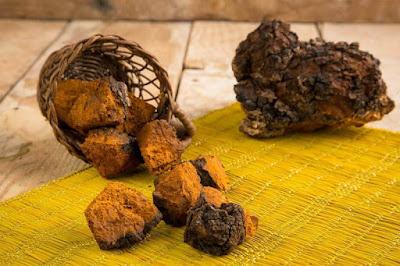 Chaga Mushroom Company in Mizoram