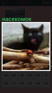 кошка наблюдает за ползущим насекомым