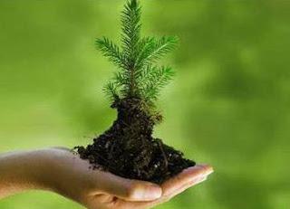 Risalah Islam Perintahkan Umatnya Jaga Kelestarian Lingkungan Alam