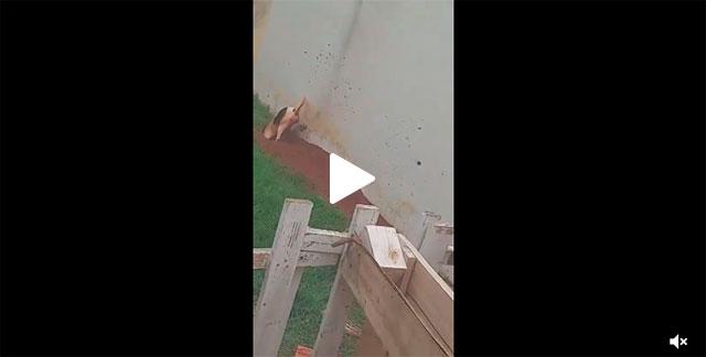 https://www.ahnegao.com.br/2019/11/quando-voce-adota-um-cachorro-e-ganha-um-tatu-no-pacote.html
