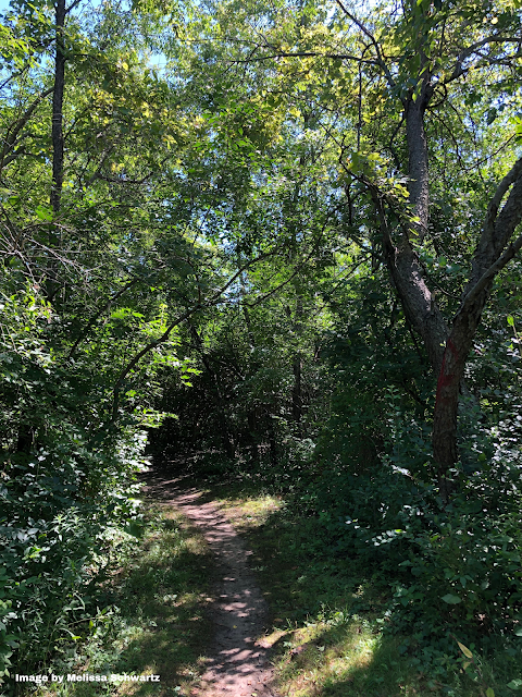 A natural trail winds through the woodlands at Dixie Briggs-Fromm Nature Preserve in Dundee Township, Illinois.