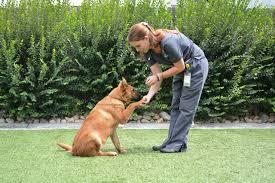 Avantages de prendre votre chien à l'école d'obéissance