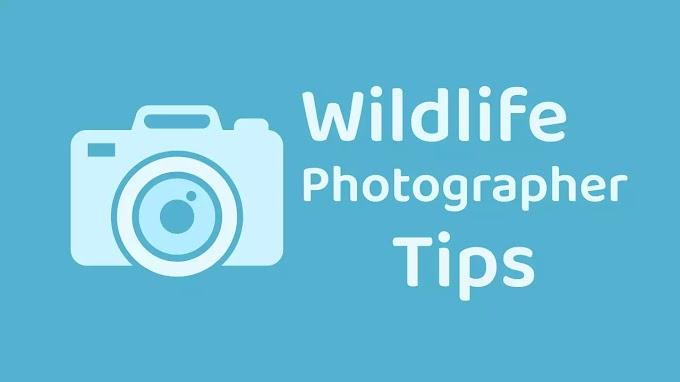 Wildlife Photographer बनने के Best Way - in HINDI | Wildlife Photography क्या है