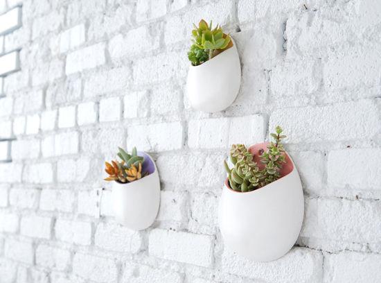 diy-tutorial-bonitas-macetas-pared-suculentas