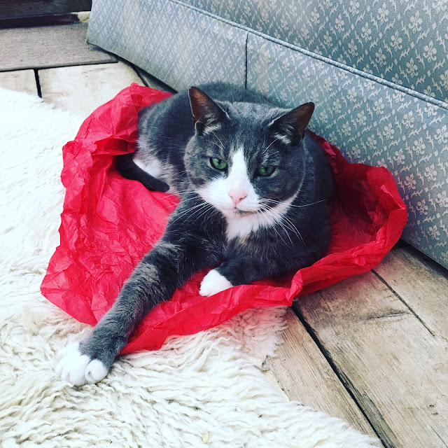 cat sitting in tissue paper #WhatsYourX Sony Xperia X
